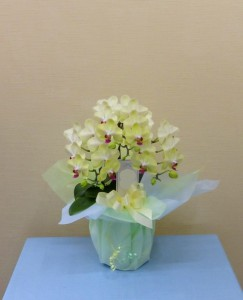 ご家族の心の癒しに お供え花 ミニコチョウランザルツマン