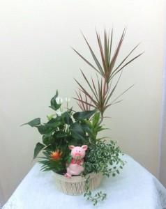 飛騨杉の皮を土の代わりに使った寄せ植え(4)