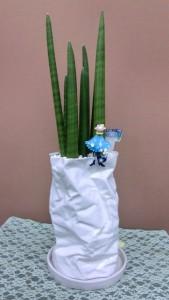【観葉植物】プレゼントに変わった器とキリンドリカ