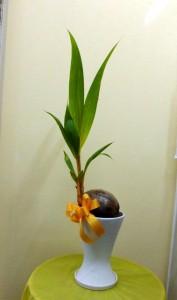 【観葉植物】ちょと早い南国ムード漂うサマーギフト「ココヤシ」