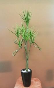 【観葉植物】ぐにゃぐにゃのホワイボリー