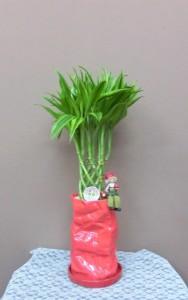 【観葉植物】プレゼントに変わった器と萬年竹
