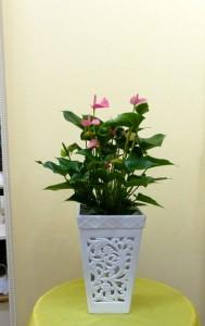 【花鉢】父の日の贈り物に透かし彫りの器に入った可愛いアンスリューム