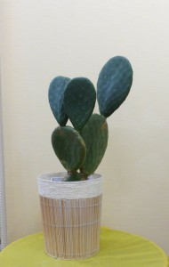【観葉植物】ブディックのオープンに「うちわサボテン」
