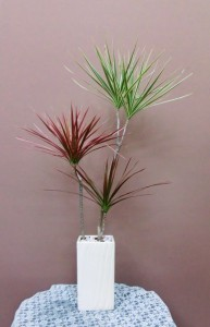【観葉植物】新築祝いに3色コンシネを