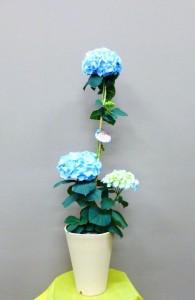 【花鉢】母の日ギフトにオランダで育成された花色が変わるユニークなブルーのアジサイ「カメレオン・ハイドランジア」