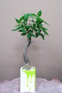 【観葉植物】ペンキ柄の器とパキラ