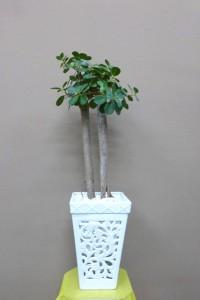 【観葉植物】透かし彫りの器「小さいガジュマルパンダ」01