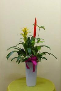【花鉢】サマーギフト・スマートなグズマニアの寄せ植え
