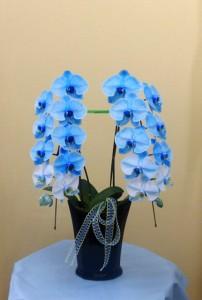 【胡蝶蘭】お盆のお供えにブルーのコチョウラン