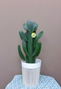 【観葉植物】可愛い贈り物にサボテンを♪