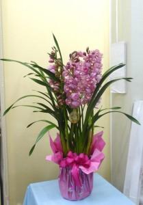 花のお歳暮 新品種シンビジューム福を呼ぶお姫さま