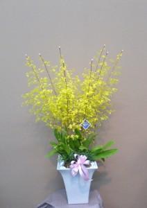 花のお歳暮 オンシジュームの寄せ植え