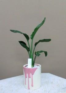【観葉植物】父の日の贈り物 ストレチア