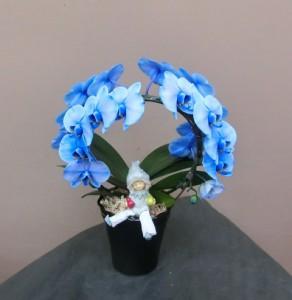 【胡蝶蘭】一風変わった形:アーチ状の蘭鉢02