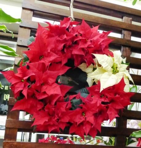 「【花鉢】ウインターギフト「吉岡麗子さんのポインセチアリース」