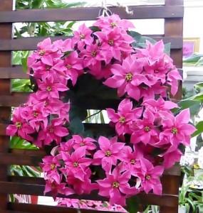 【花鉢】ウインターギフト「吉岡麗子さんのプリンセチアリース」