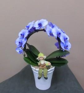 【胡蝶蘭】一風変わった形:アーチ状の蘭鉢01