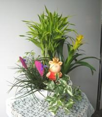 初夏の寄せ植え②万年竹