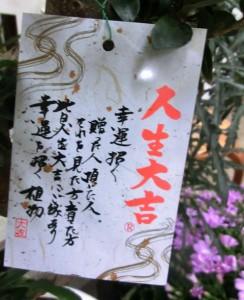 【観葉植物】幸運を招く曲がりガジュマル02
