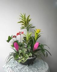 初夏の寄せ植え①ドラセナ<スリランカ>