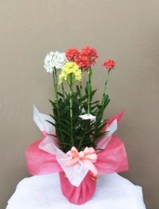 【ウインターギフト】お歳暮にお花をプレゼントするのはいかがですか?01