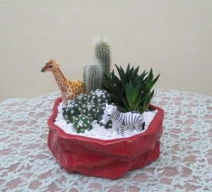 【観葉植物】お中元の贈り物「サボテン羽曳野サファリ」