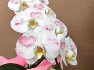 【いい夫婦の日】ハートの化粧欄をプレゼント02