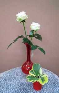 【バラ】バレンタインのお返しに「ホワイトローズ」