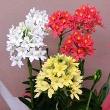 【ウインターギフト】お歳暮にお花をプレゼントするのはいかがですか?02